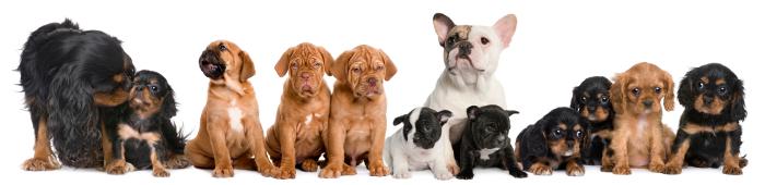 pets-vets-service_