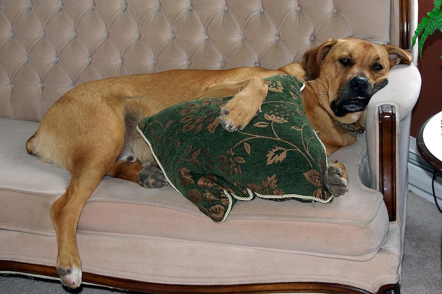 bigstock_Dog_Making_Himself_At_Home_1939063
