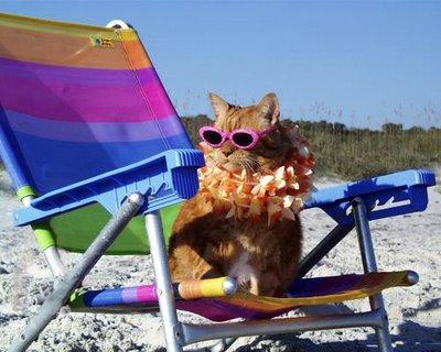 cat-on-beach1